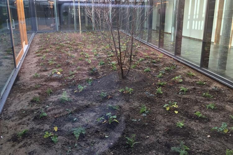 Un potager d'herbes médicinales au collège Simone Veil
